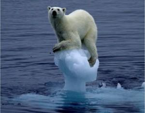 osos polares calentamiento global
