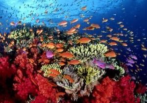 Carolina del norte Coral