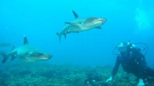 bucear galapagos tiburones