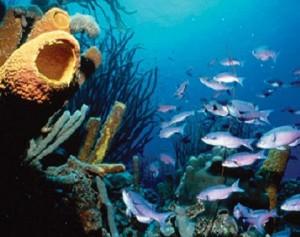 diving-islas-bonaire