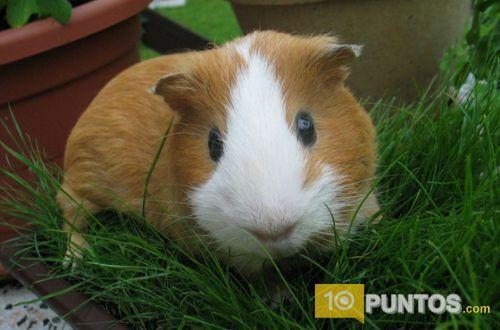Las 10 mejores mascotas para tener en casa 10puntos - Mascotas originales para tener en casa ...