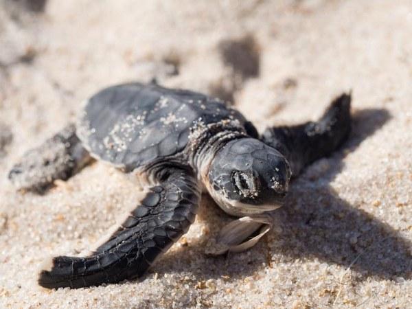 Estas son las 10 fotografías con las que te demostramos que las tortugas es un animal fascinante