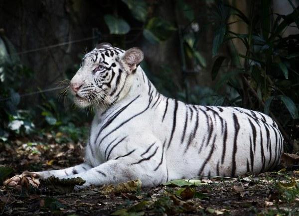 Estos son los 10 animales blancos más espectaculares que verás hoy
