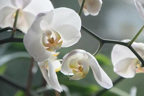 Estas son las 10 flores más interesantes del mundo