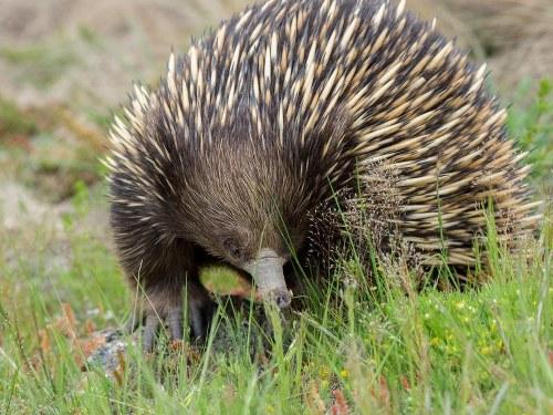 Estos 10 animales de Australia conquistarán tu corazón
